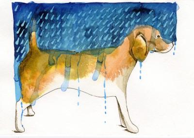 Beagle Rain