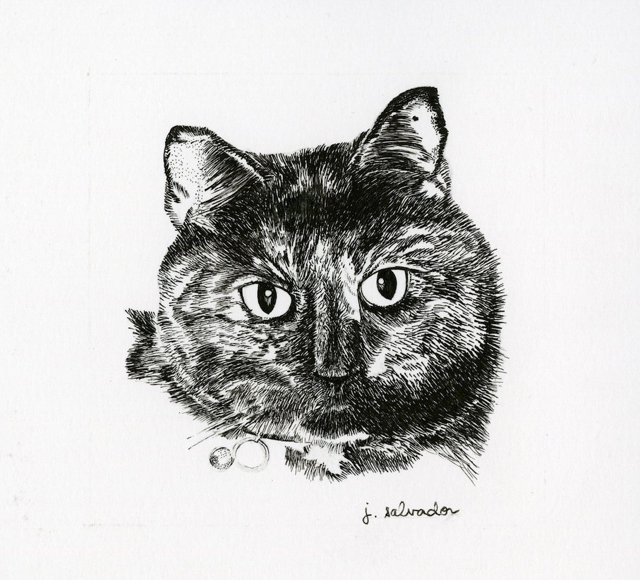 Cat portrait pen and ink illustration