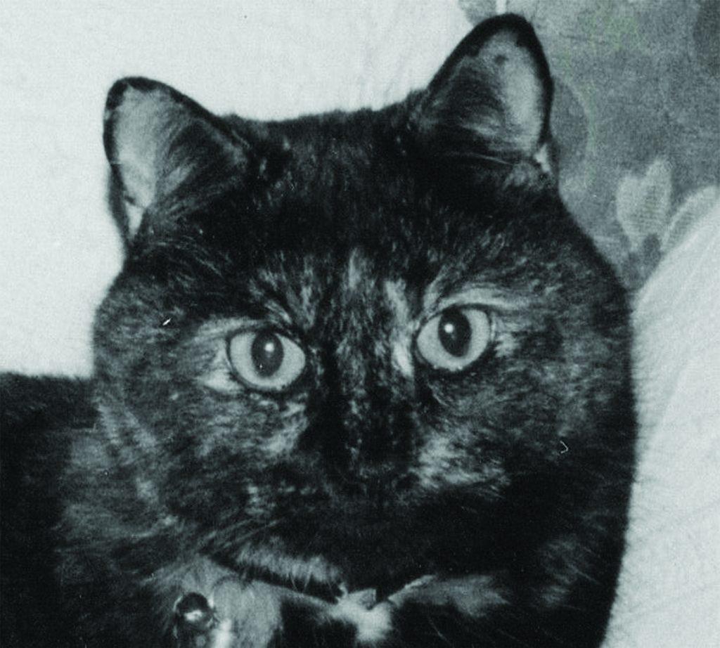 Cat portrait photo original